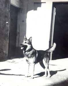 """Vecchio ingresso con il cane-custode """"Wolf"""", 1955"""