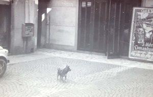 Vecchio ingresso con il cane Brick. anni 60-70.